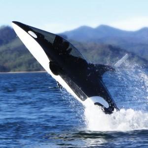 sous marin baleine maldives